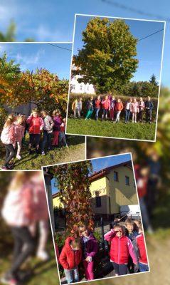 W poszukiwaniu kolorów jesieni